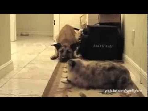 hunde die vor katzen angst haben rofl filme. Black Bedroom Furniture Sets. Home Design Ideas
