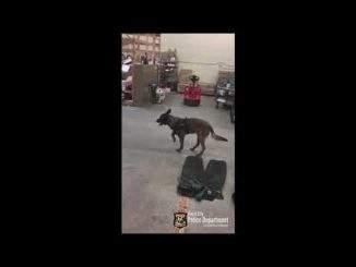 Polizeihund trägt zum ersten Mal Hundeschuhe